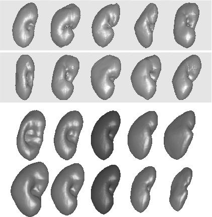 shape statistics