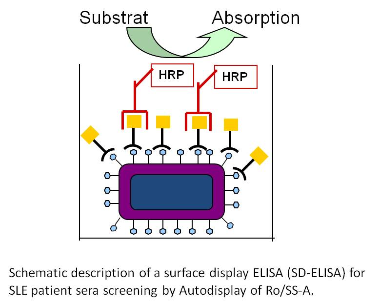 Schematic Description Of A Surface Display
