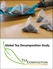 Teacomposition2