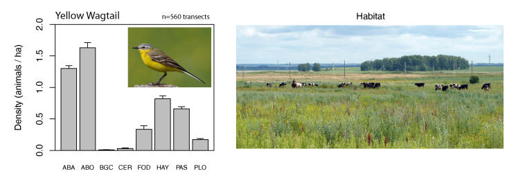 Population densities of Yellow Wagtail in different habitats in Western Siberia. Soviet crop fields and hay meadows, now abandoned and overgrown with dense vegetation (categories ABA and ABO), host the highest densities – a species clearly profiting from land-use change on the breeding grounds.