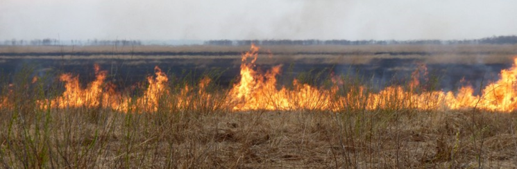 Fire influences ecosystem properties over large areas in Russia.