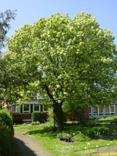chemiepb institut garten pflanzenbestand