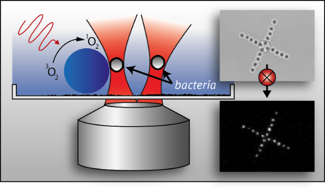 Mechanical Modeling and Characterization of Cancer Cells Using Optical Tweezers