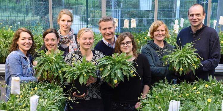 Das Team aus Münster um Dr. Christian Schulze Gronover (Mitte) und Prof. Dr. Dirk Prüfer (r.)© WWU / Peter Grewer