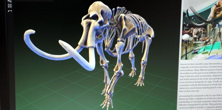 So soll es einmal aussehen: Eine 3-D-Animation hilft Präparator Oliver Kunze nicht nur, die Mammutknochen wieder richtig zusammenzusetzen, sondern auch, die gewünschte Körperstellung einzuhalten.