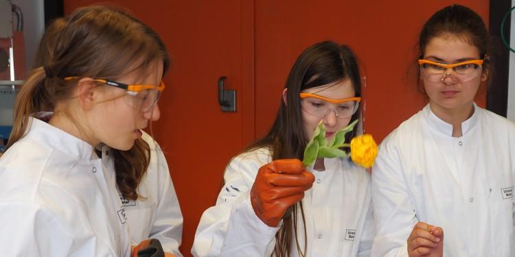 Teilnehmerinnen bei einem Besuch in einem Labor im Institut für Materialphysik, bei dem sie erleben, wie Forscherinnen Materialien mit flüssigem Stickstoff kühlen, und was dann mit diesen passiert. Die Tulpen werden derartig (tief-)gekühlt, dass sie in tausend Teile zerspringen, wenn man sie auf den Tisch schlägt.