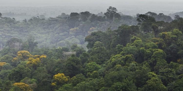 Der Regenwald in Brasilien - seine Überwachung, um illegale Rodung zu dokumentieren, ist ein Beispiel für ein praxisrelevantes Thema des Master-Studiengangs.<address>&copy; colourbox.de</address>
