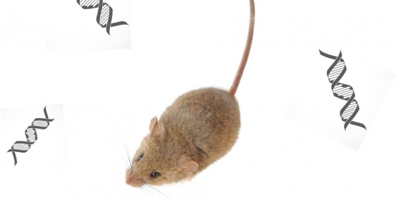 The scientists compared several properties of de novo genes in mice with those in other types of mammals.<address>&copy; Montage: colourbox.de/Royalty free</address>