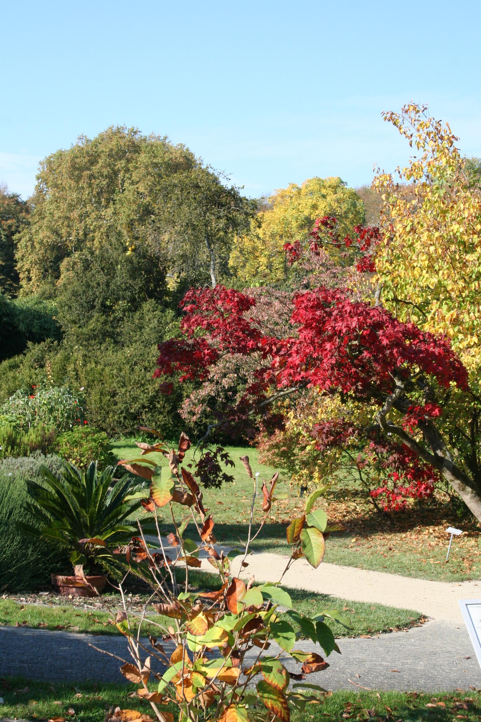 öffentliche Führung Die Bäume Im Botanischen Garten