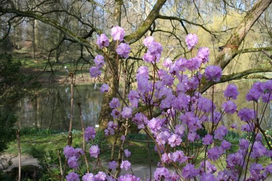 Frühlingserwachen Im Botanischen Garten